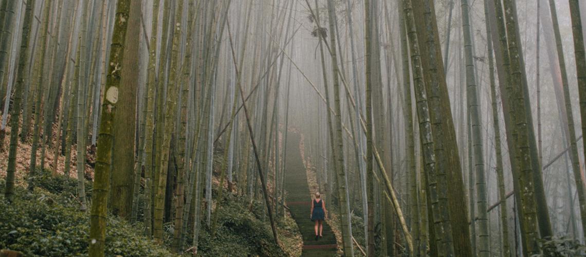 Op uitstap: een magische wandeling in een bamboebos🎋